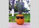 """Slajdowisko """"Ananasy w Kolumbii"""""""