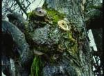 """Wernisaż Wystawy Ewy Brandt """"Sekretne życie drzew"""""""