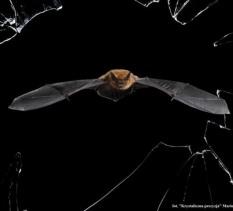 Wernisaż Fotografia Dzikiej Przyrody 2016