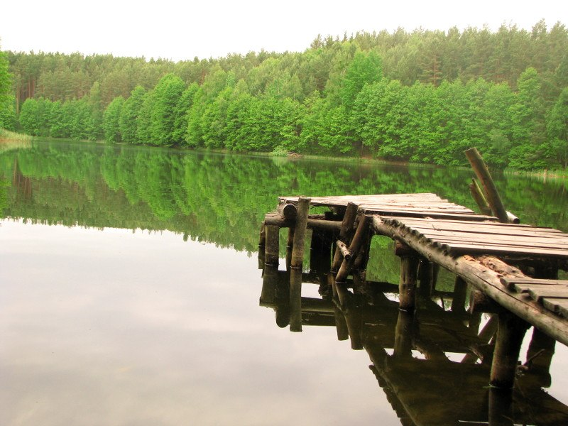 Widok na leśne jezioro - idealne miejsce na spacery