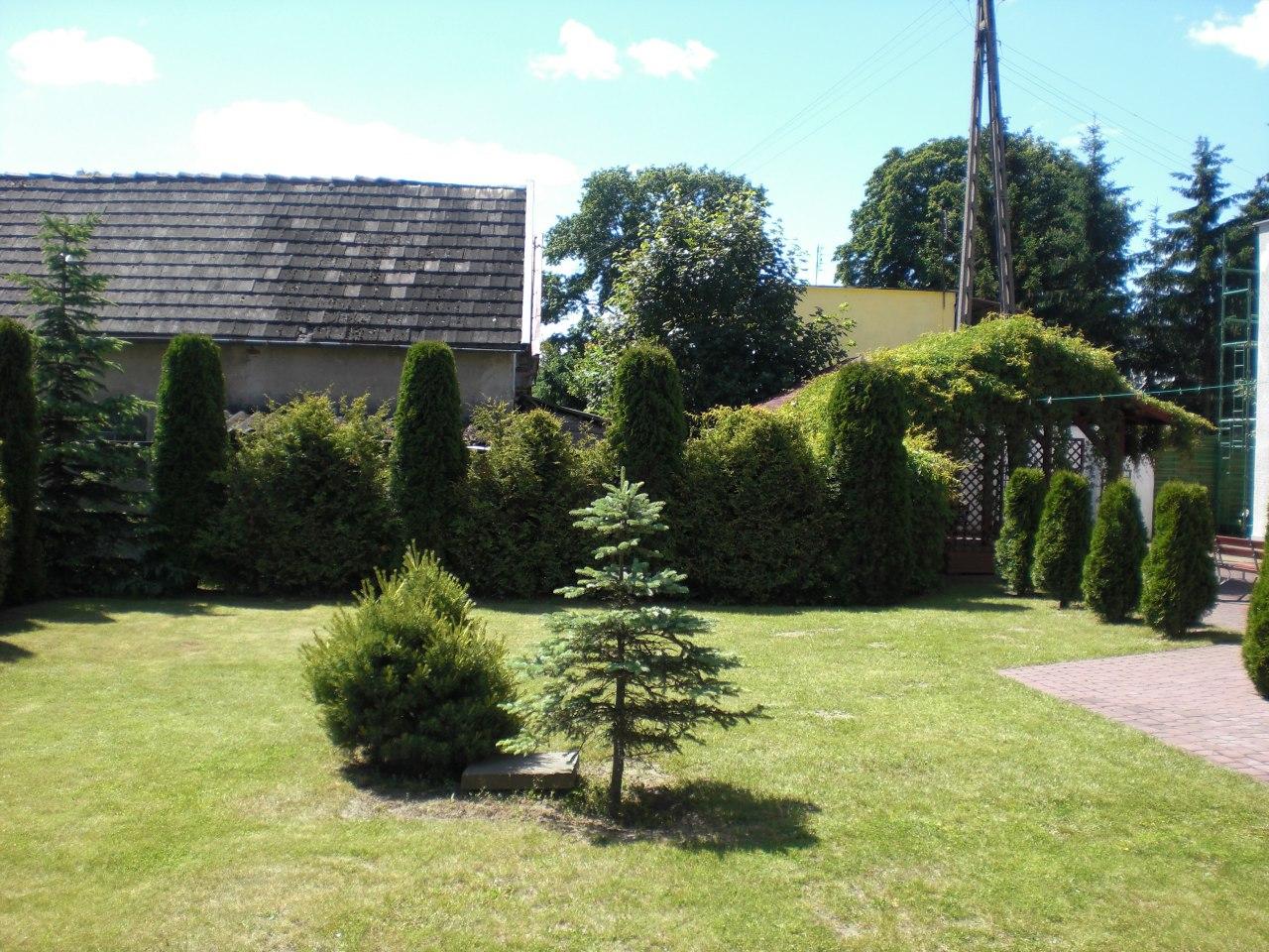 Podwórko zielone