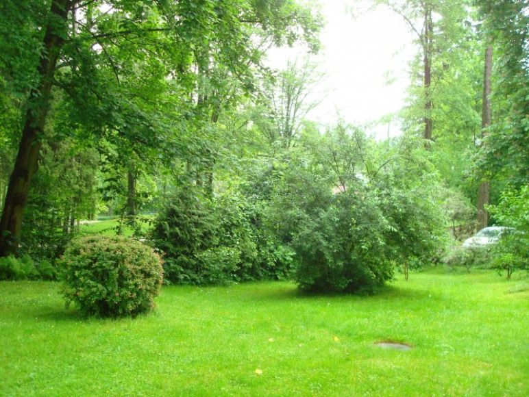 Widok na ogrod - Garden view