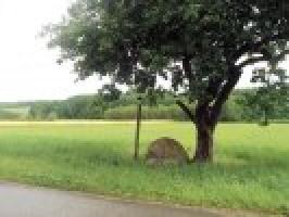 Agroturystyka Kołogłaz