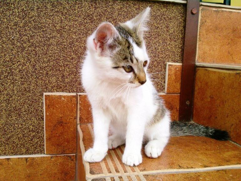 Kotki - zwierzęta w gospodarstwie.