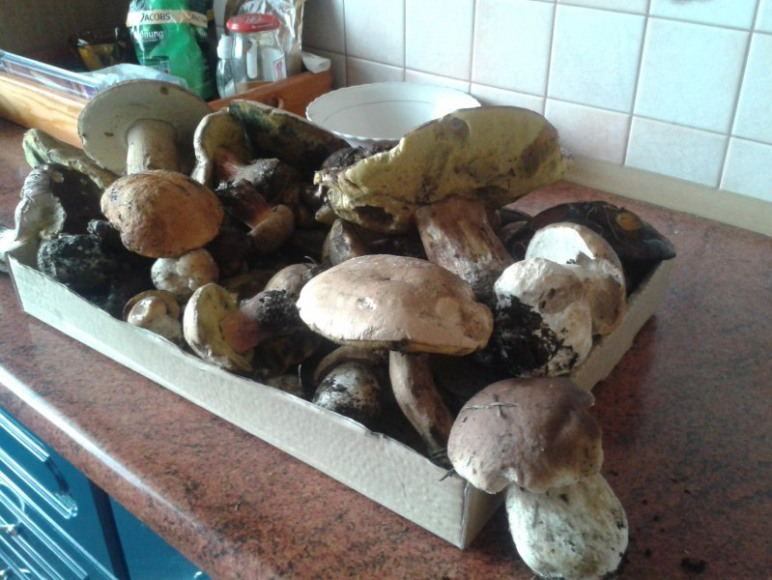 Zawojskie lasy pełne grzybów