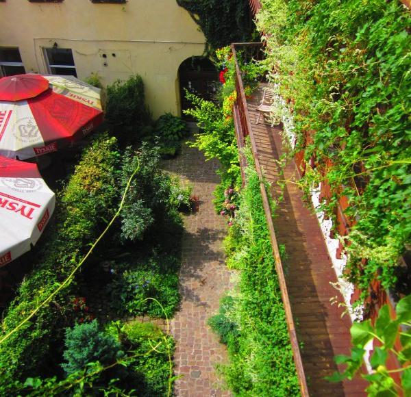 Ogród / courtyard
