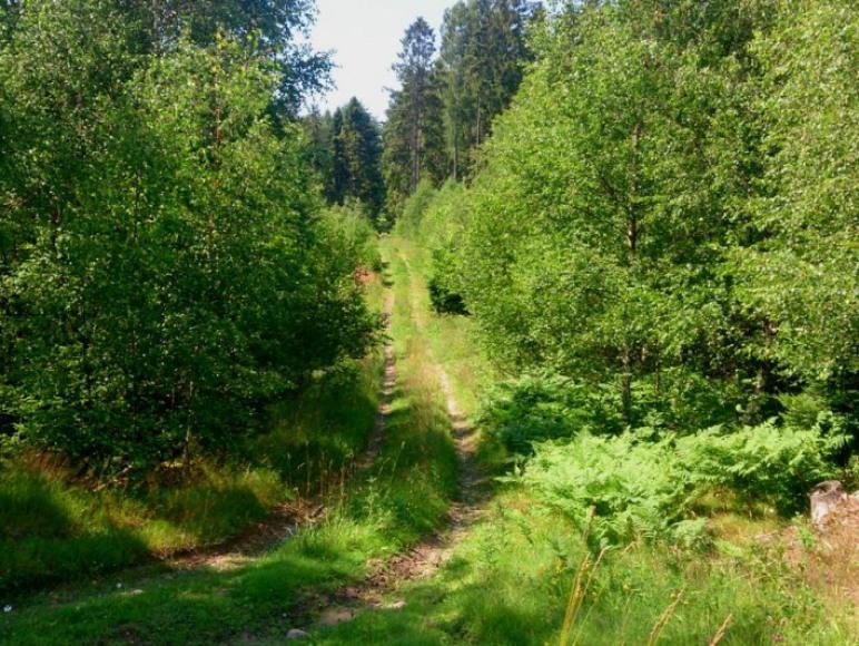 Okoliczne lasy