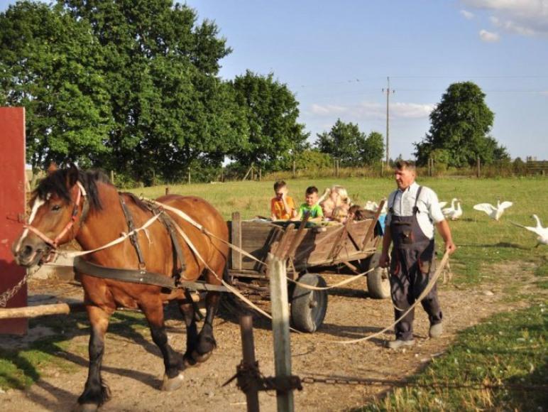 Wycieczka z koniem