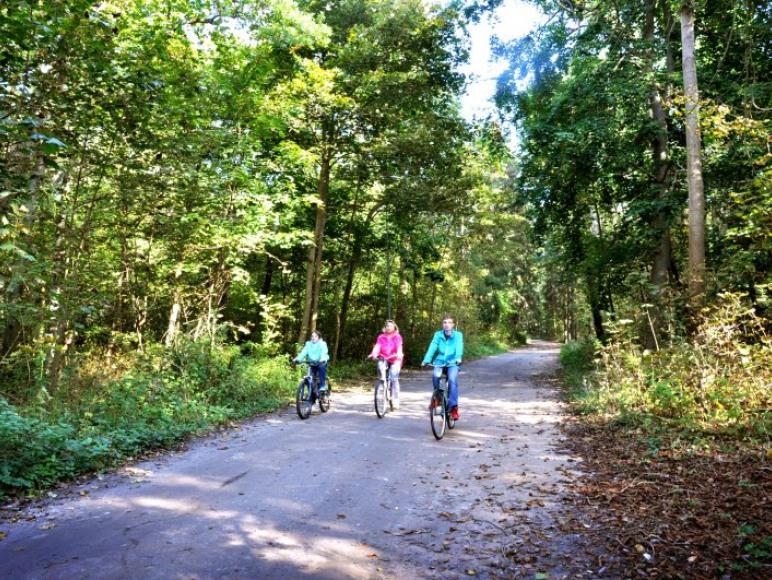 Liczne ścieżki rowerowo-spacerowe