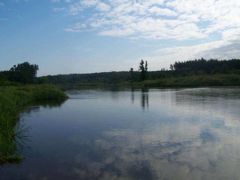 Rzeka Pilica