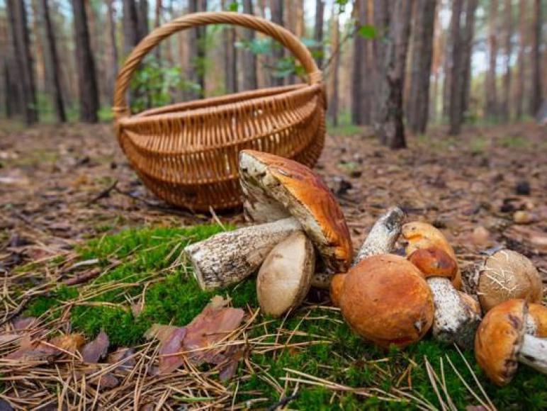 w okolisy jest mnóstwo lasów no i grzybobranie przecudowne.