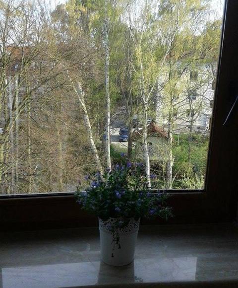 pokój 2 widok z okna