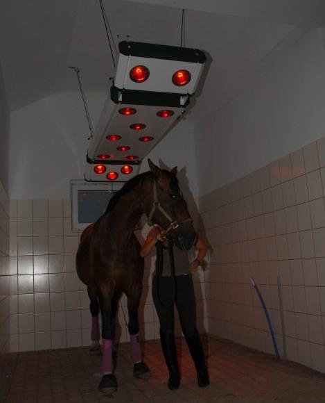 Ośrodek Jeździecki GoldenHorse