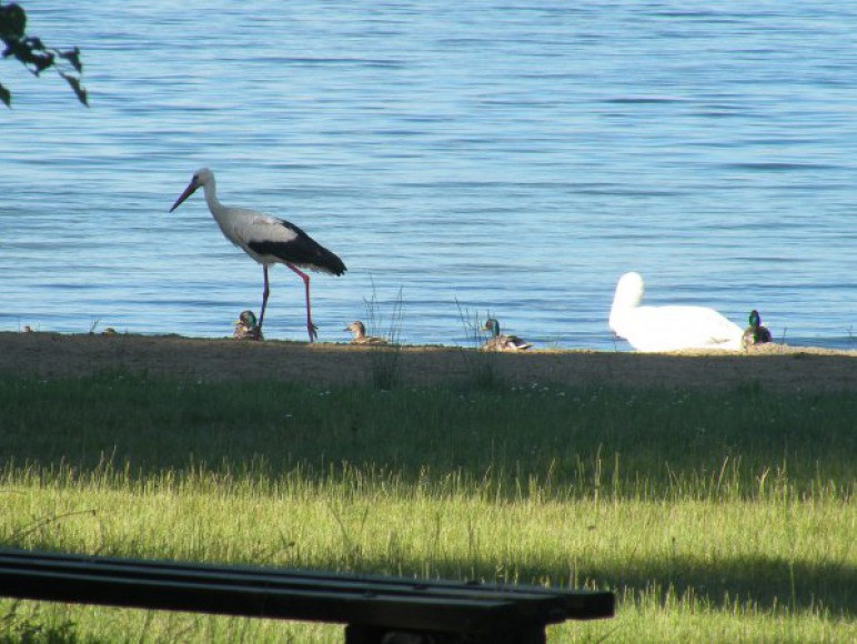 ornitolodzy i miłośnicy zwierząt maja na co popatrzeć