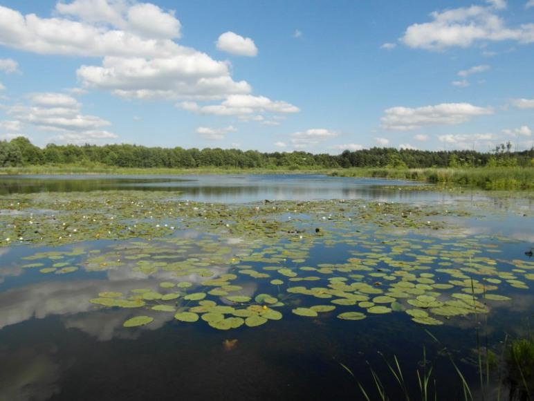 Jezioro w Słowikowie z pomostami