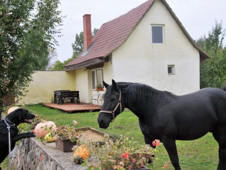 Domek murowany, koń Boston i pies Brador