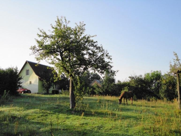 Domek murowany, widok z sadu