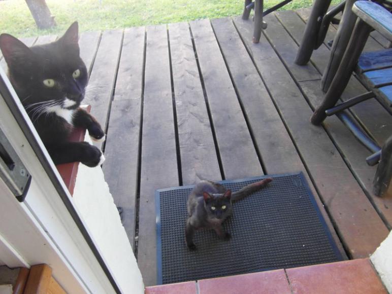 Kotki czekają na gości