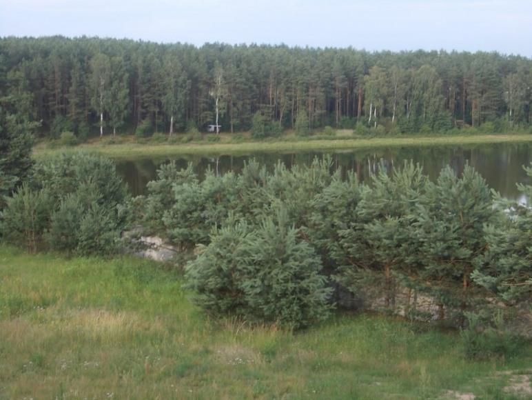 widok z balkonu na las i jezioro