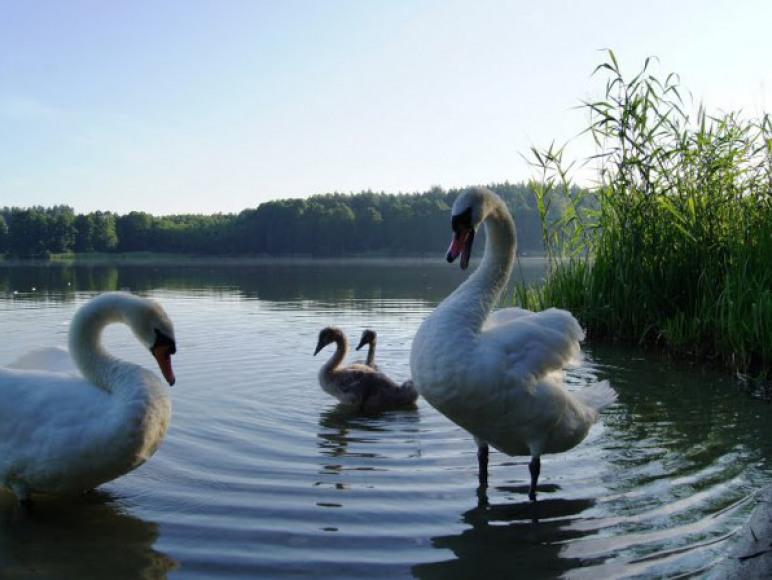 Różnorodność ptactwa wodnego