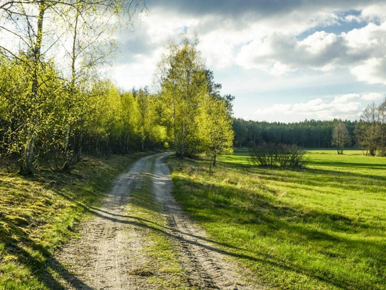 Droga do Sosnowej Zagrody