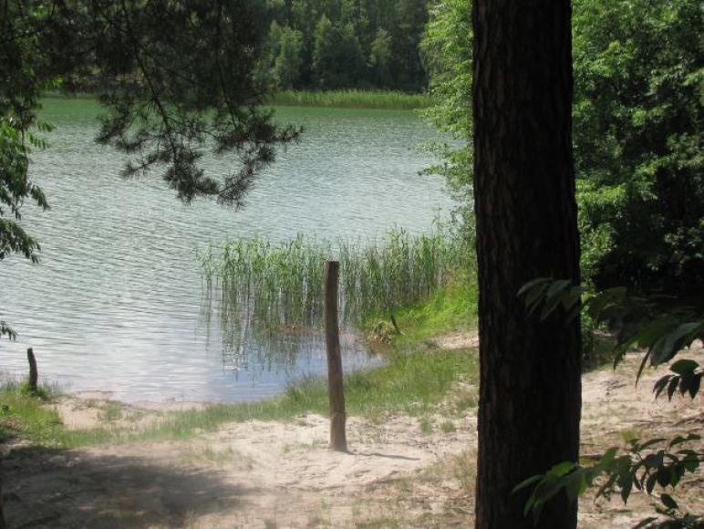 Dom w lesie Puszcza Zielonka k.Poznania + sala