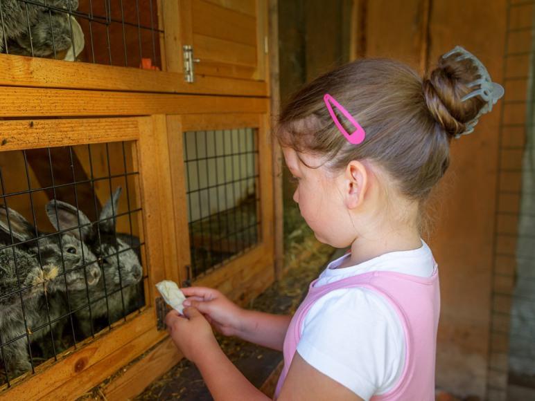 dzieci karmią króliki