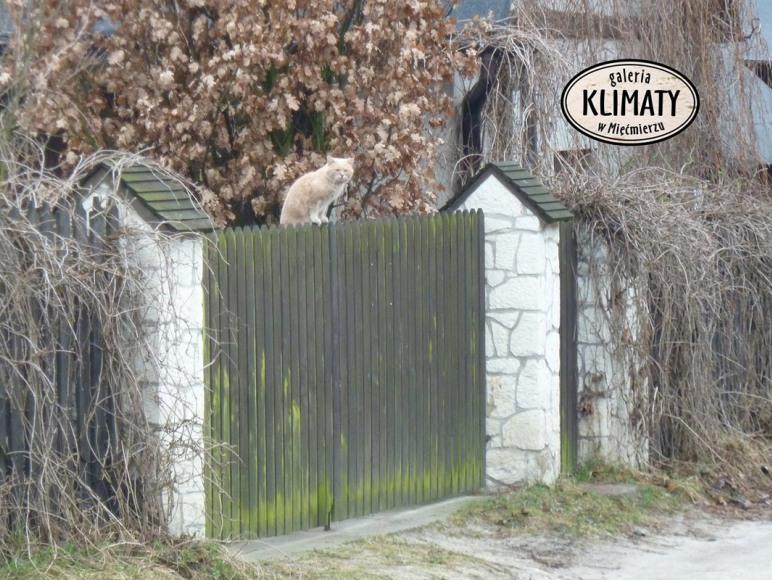 Galeria Klimaty