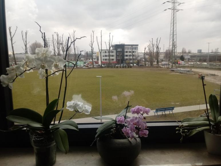 widok z okna kuchni na boisko