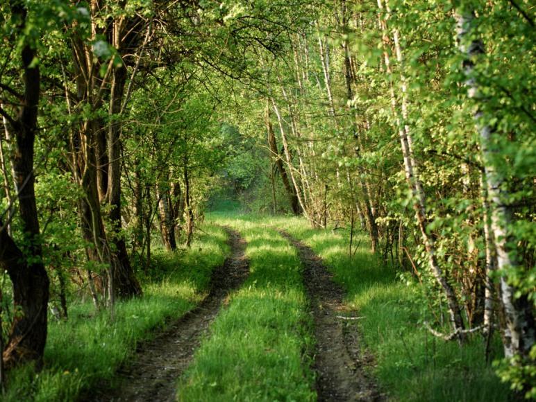 Droga do Las się Żyje