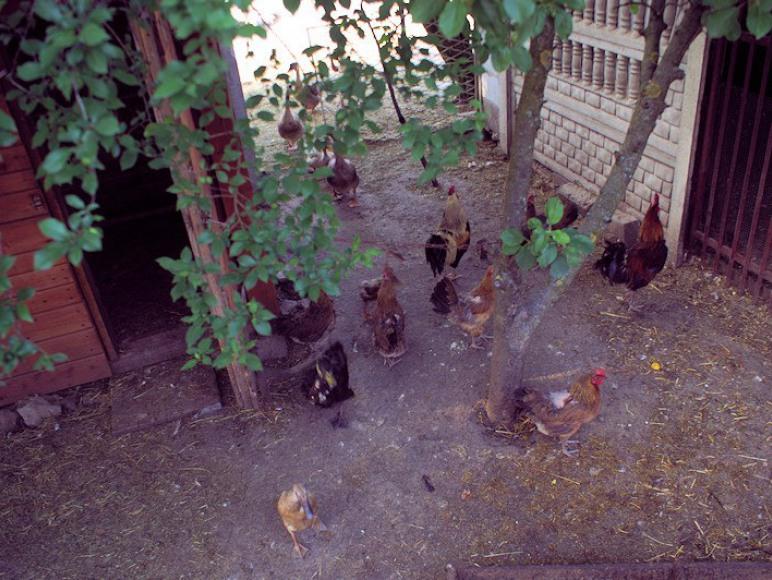 Agroturystyka Ranczo