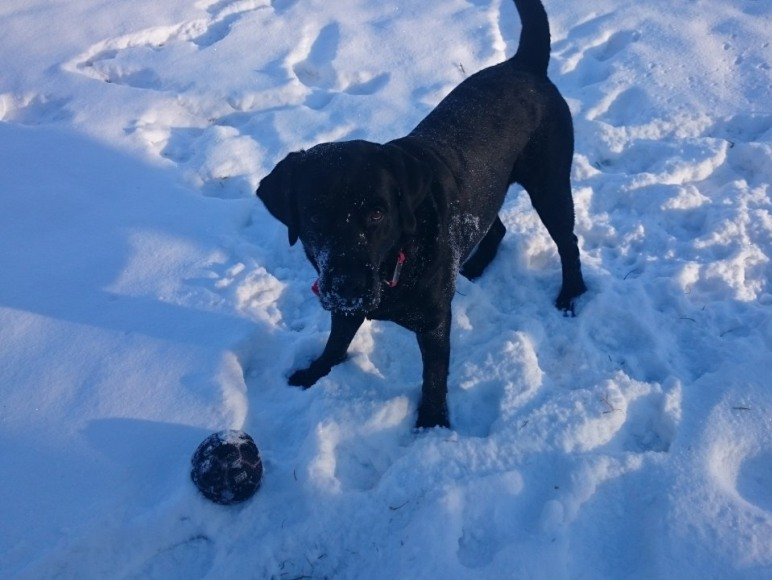 Nasz prywatny pies :)