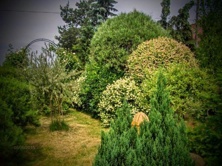 Agroturystyka u Willima