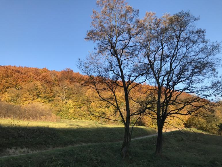 trasy spacerowe jesienią