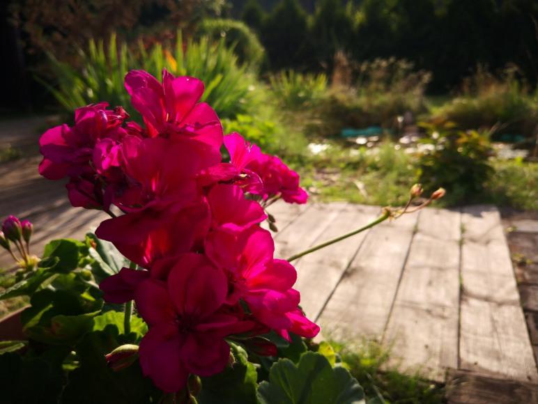 W naszym ogrodzie.