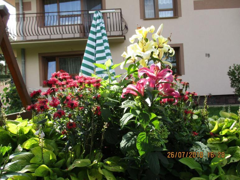 czas lata, czas kwiatów w ogrodzie