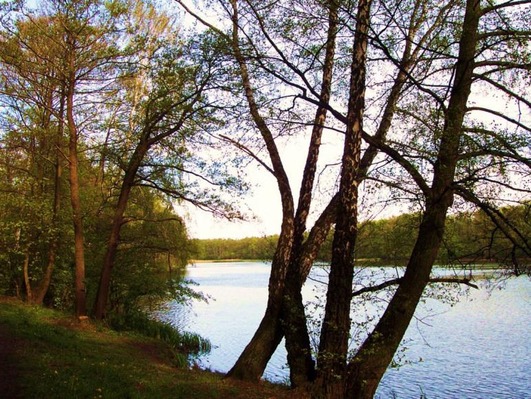 13. jezioro w stogowskim lesie