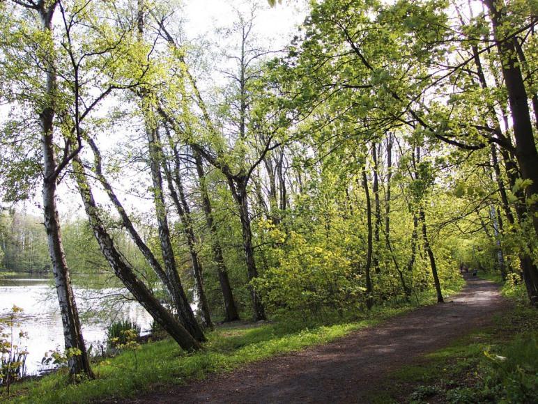 14. leśna ścieżka spacerowa wokół jeziora