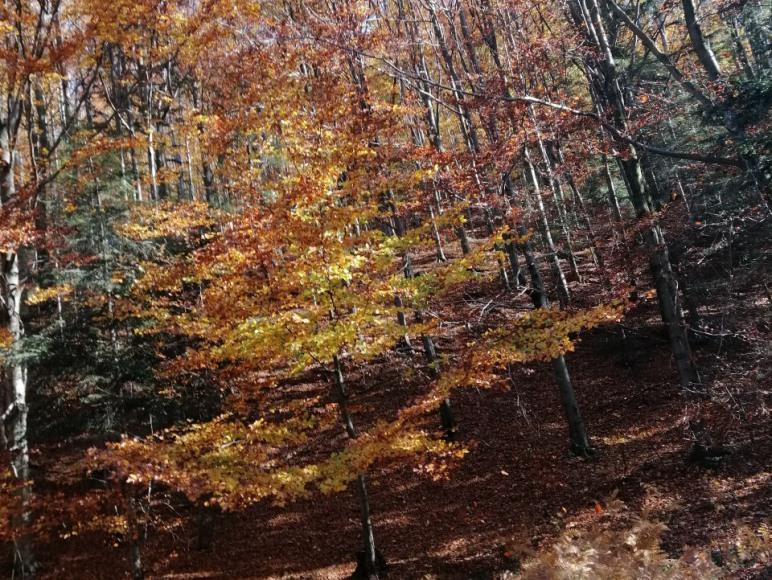 Jesień obok Rancza