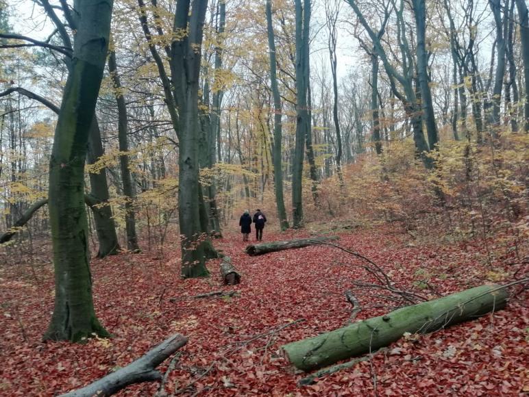 Jesień w rezerwacie
