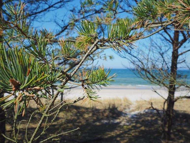 plaża lubiatowo kopalino