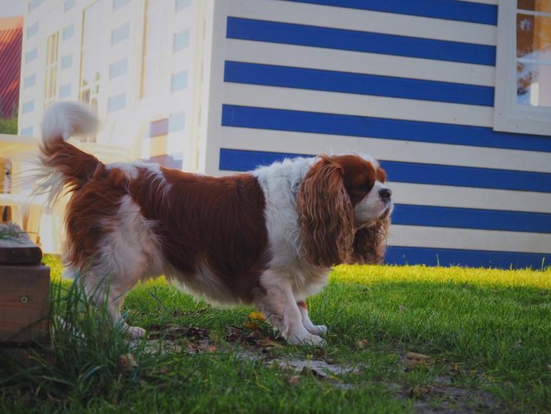 przyjmujemy psy morskie domki kopalino