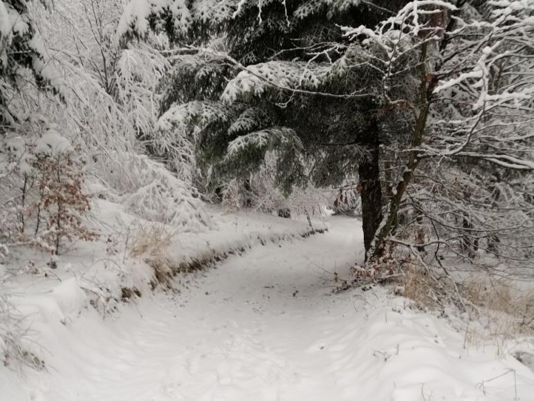 Zima obok Rancza