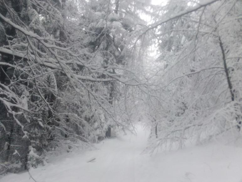Zima w lesie obok Rancza