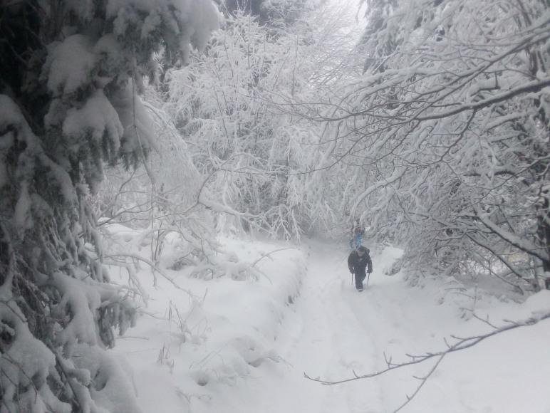 Spacer po lesie obok Rancza
