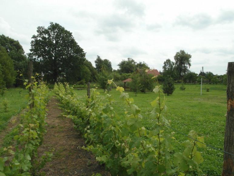 Agroturystyka Mozaika - Jabłonów k. Żagania