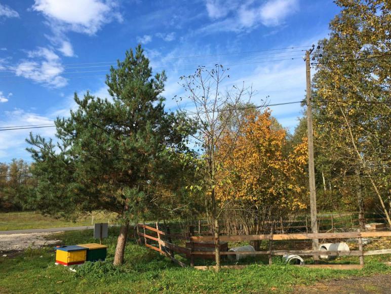 Stajnia Alado - Gospodarstwo Agroturystyczne