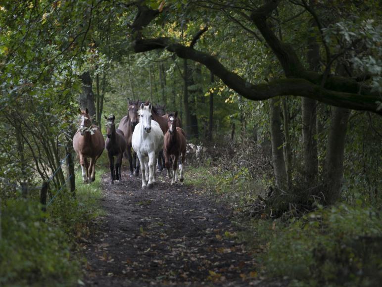 Dworska Stajnia - konie