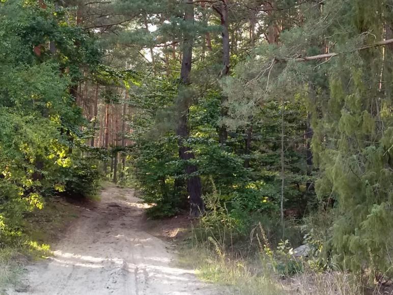 Ścieżki rowerowe i piesze w Jacni