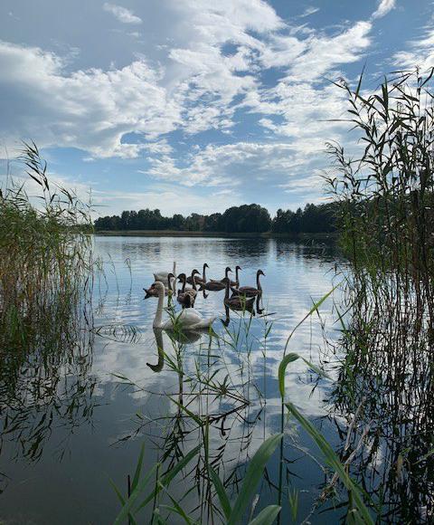 jezioro Piasutno